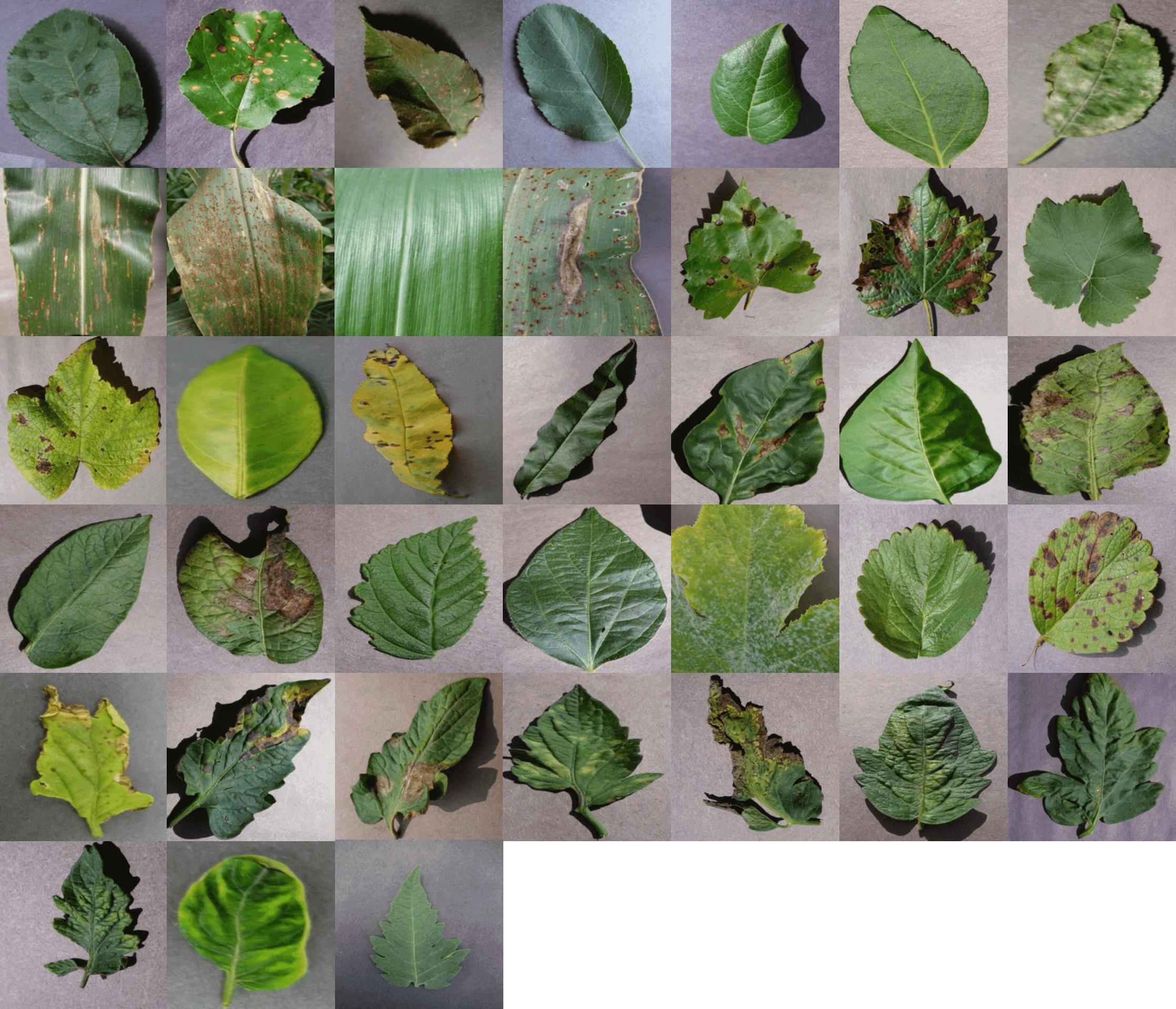 Plant Disease Detection